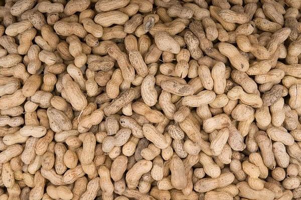 KB Monkey Nuts 300GM